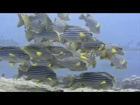 Addu Atoll - Maldives