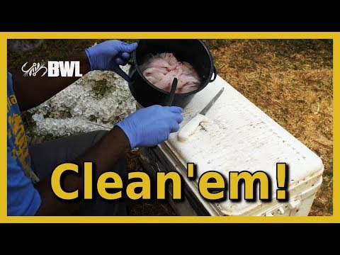 How to Clean Bluegill and Catfish