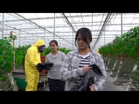 Justice for Migrant Workers // Justice pour les travailleurs migrants