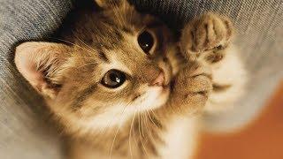 Как успокоить кота по методу LIDER'a!