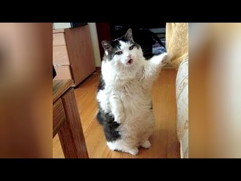 Super HILARIOUS ANIMAL videos – Get ready to LAUGH EXTREMELY HARD!