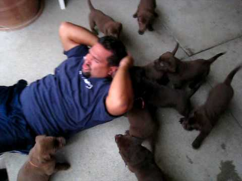 Puppies attack!!
