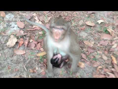 Nature Life Vivi Ep 2 - Mom Monkey And Baby
