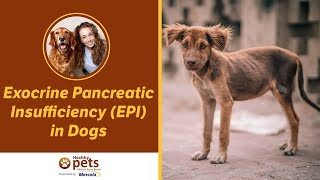 Exocrine Pancreatic Insufficiency (EPI) in Dogs