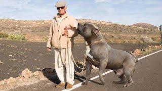 اضخم 15 كلب حراسة فى العالم (اذا رايت احدهم فعلم انك ميت)