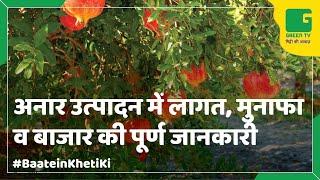 Pomegranate (Anar) In Baatein Kheti Ki On Green TV