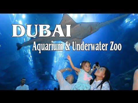 Dubai Aquarium and  Underwater zoo | What's inside of the Dubai Aquarium and Underwater Zoo