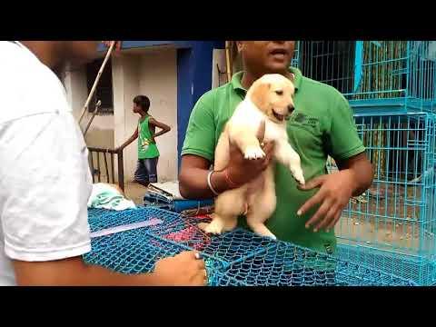 Galiff street pet market kolkata || exotic cute dogs ||exotic birds ||wholesale pet || fish || HD