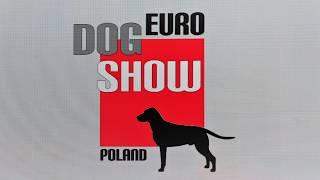 EURO DOG SHOW 2019 Poland Cairn terrier