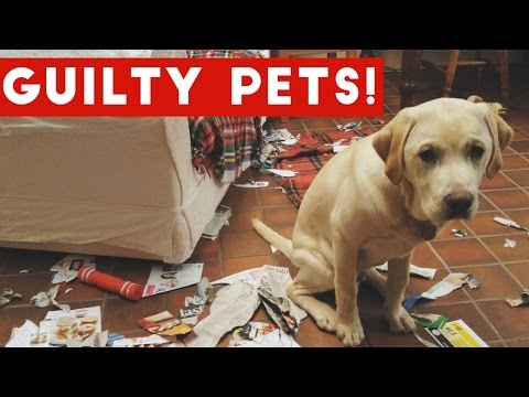 Funniest Guilty Pet Videos Weekly Compilation 2017 | Funny Pet Videos