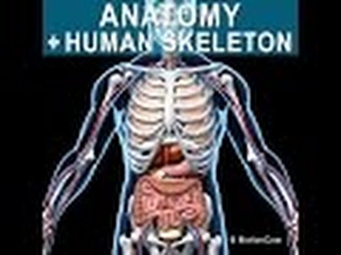 Anatomy and Physiology of Skeletal System - YouTube