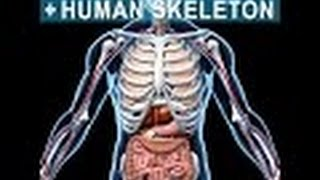 Anatomy and Physiology of Skeletal System