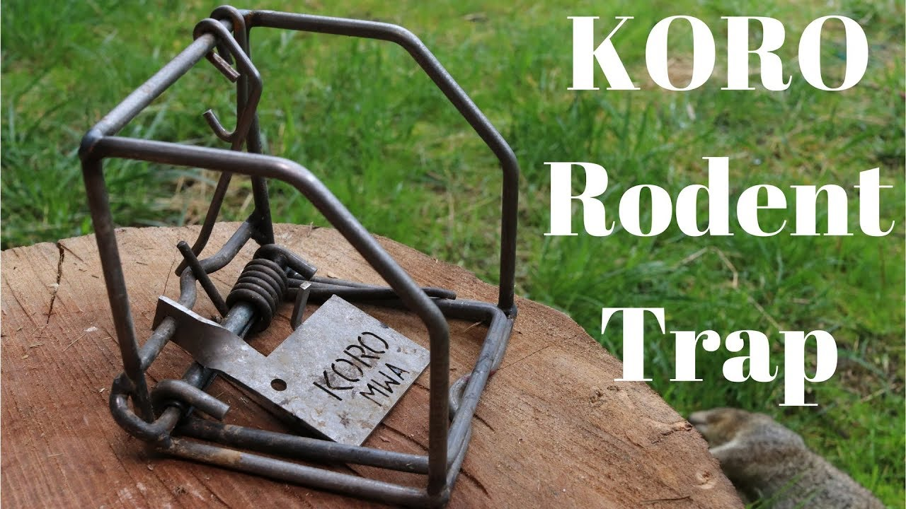 the-koro-rodent-snap-trap-very-powerful-ground-squirrels