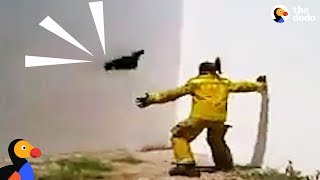Man Tries To Rescue Cat Doing Parkour | The Dodo