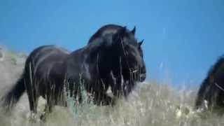 Wild Horse Island Wildlife | Flathead Lake | Wild Horses