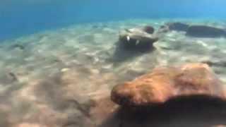 О.Крит - Рыбы Ливийского моря (2015 г.)(Съемки рыб, обитающих на южном берегу острова Крит, г.ород Иерапетра, пляж отель