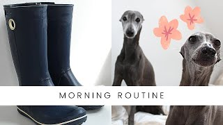Funny Dogs Morning Routine Italian Greyhound
