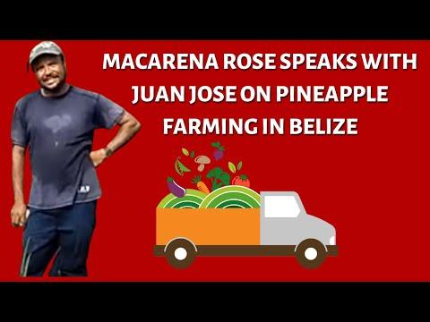 Farming in Belize-
