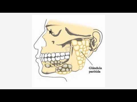 Limpiar las salivales como glandulas