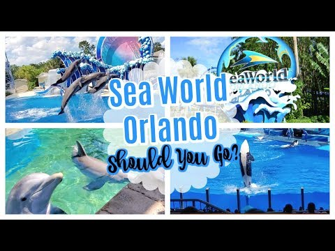 seaworld-orlando-review-&-highlights-|-things-to-do-at-seaworld-|-seaworld-dolphin-encounter