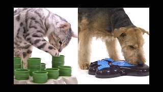Aikiou Interactive Dog Feeder & Aikiou Cat Stimulo Activity Center - Ready Pet Go