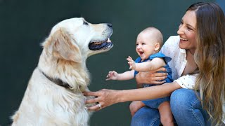 10 Dog Breeds That Are Good With Babies