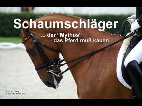 """Schaumschläger … der """"Mythos"""" - das Pferd muß kauen -"""