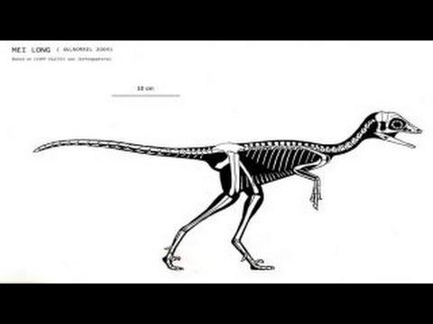 Mei | Enciclopedia sobre Dinosaurios
