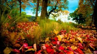 Moogwai - Viola (Armin van Buuren Remix) [Platipus Records]