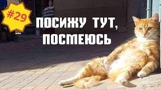 Приколы про животных Смешное видео про котов собак и не только Выпуск 29