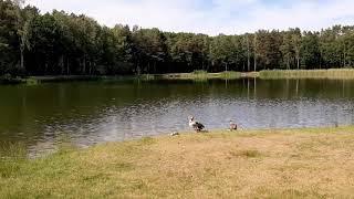 Природа Голландии. Где отдохнуть. Лето.