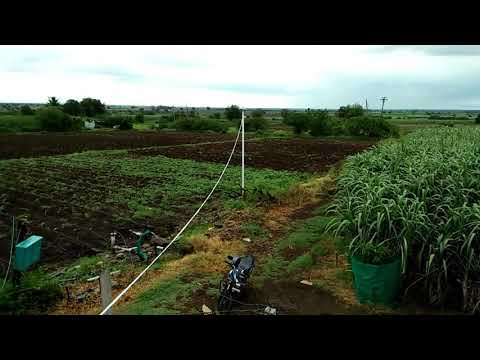 10001 sugarcane variety in Solapur, 2017