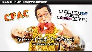 PIKO太郎首次於手機遊戲登場! 貓咪大戰爭合作紀念開始! 【全世界一起C...