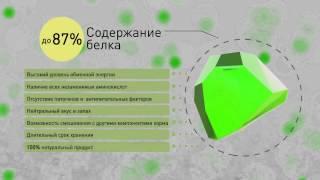 видео: Биотехнологии