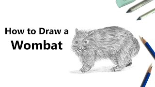 How to Draw a Wombat with Pencils [Time Lapse]