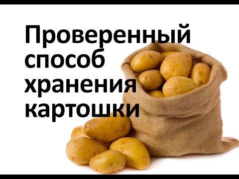 Оптимальная температура хранения картофеля в домашних условиях
