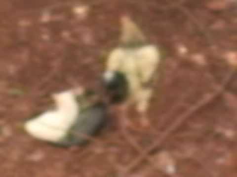 from Alberto sexo entre animais videos