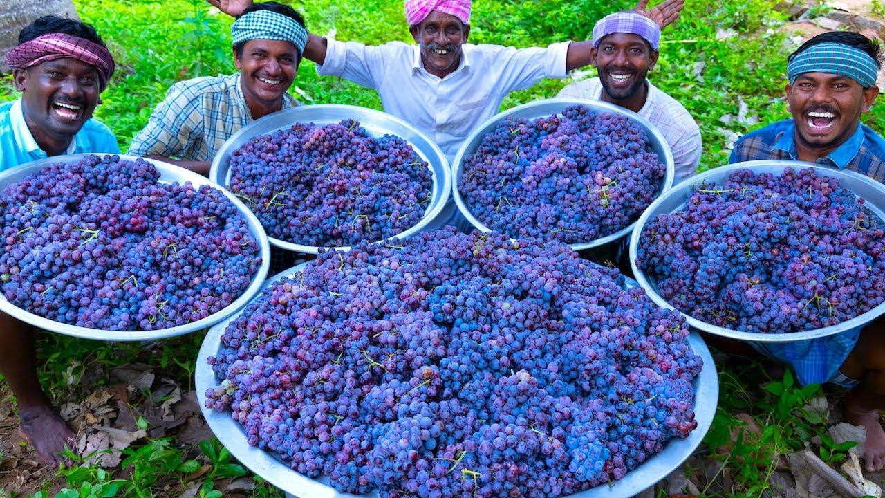 GRAPE JUICE | 100 KG Grapes | Natural Pure Healthy Fruit Juice Making In Village | Juice Recipe