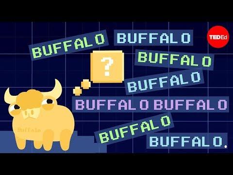 Video image: Buffalo buffalo buffalo: One-word sentences and how they work - Emma Bryce