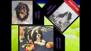 Cavalier King Charles Spaniels In Wisconsin