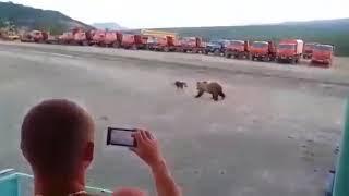 Собака против медведь