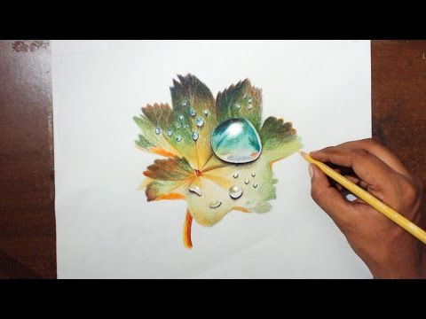 Drawing Water drops on a leaf - Prismacolor pencils