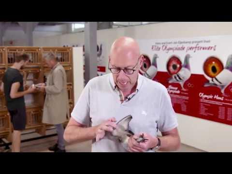 Eijerkamp Pigeon Quality Criteria Version 2019