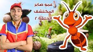 عمو صابر المكتشف الحلقة 2 النملة - Amo Saber The Explorer Part 2 ant