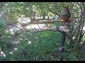 OS Birdstar Cam-1 & Cam-2