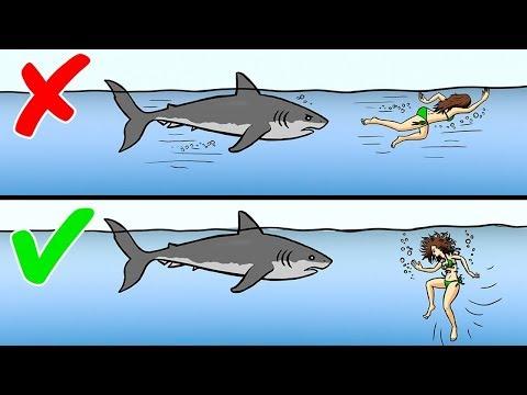 13 Tipps, wie du eine Attacke von einem wilden Tier überlebst