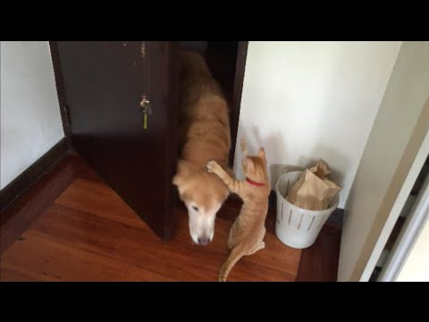 Cat Happily Greets Dog at the Door