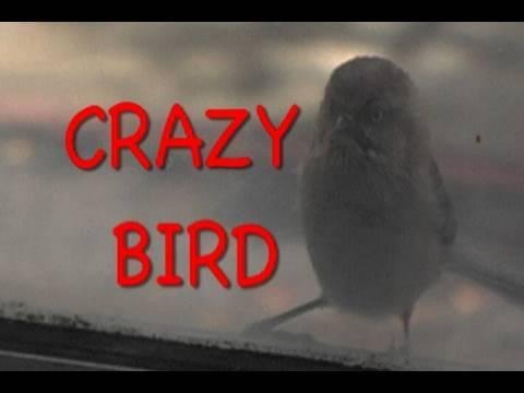 The Crazy Bird