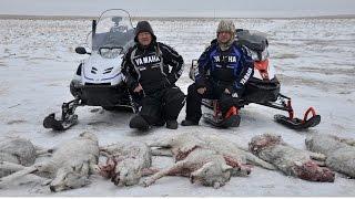 ТРЕЙЛЕР степные охотники 5 2