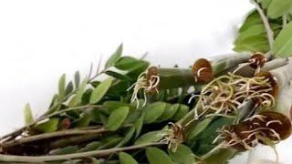 propagating ZZ plant